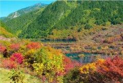 重庆的秋天哪里拍风景树叶好看?有哪些地方?