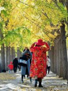 秋风秋叶知秋意,陕西哪里的景色可以看一看呢