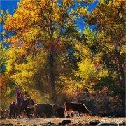 怎么拍摄秋天景色,秋季摄影技巧?